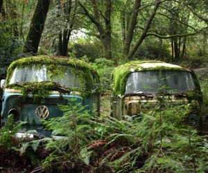 forest, nature, and van image