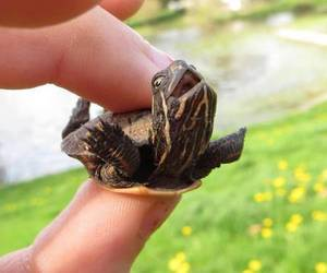 adorable, turtle, and perfect image