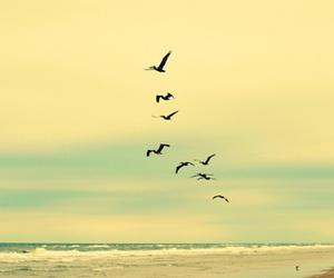 birds, beach, and sky image