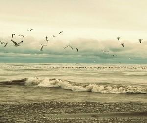 bird, beach, and sea image