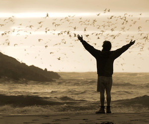 into the wild, bird, and freedom image