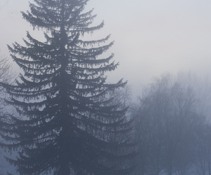 tree, fog, and black and white image