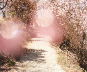 cherry blossoms, love it, and nature image