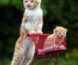 cat, shopping, and kitten image