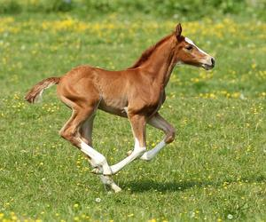 horse, little, and foal image