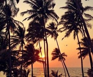 beach, palm, and sea image