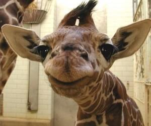 giraffe, cute, and animal image
