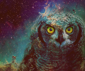 owl, galaxy, and stars image