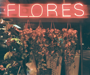 flowers, vintage, and light image