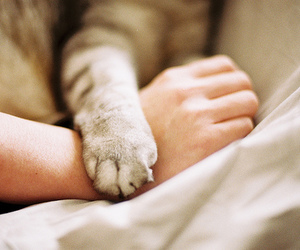 cat, hand, and animal image