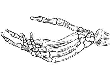 Skeleton Hand Google Search On We Heart It