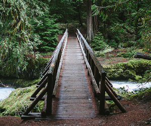 bridge, forest, and river image
