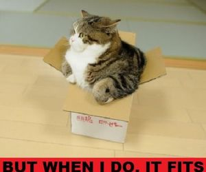 box, cat, and funny image