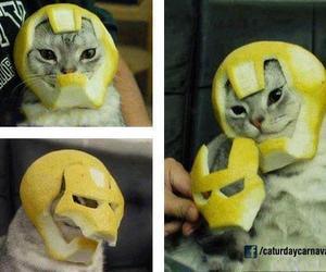 cat and iron man image