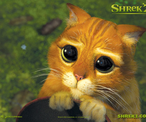 cat, shrek, and eyes image