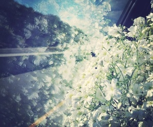 flowers, photography, and road image