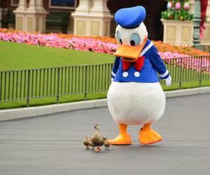 disney, duck, and donald image