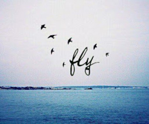 fly, bird, and sea image
