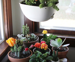 cacti, planter, and succulents image