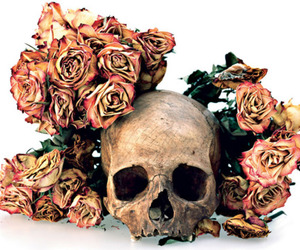 roses and skull image