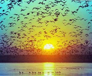 awesome, birds, and Sunny image
