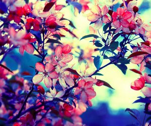 blossoms, flowers, and scene image