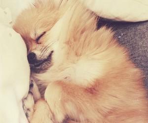 dog, sweet, and fluffy image