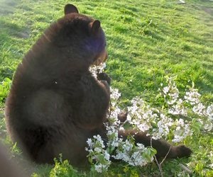 flowers and bear image