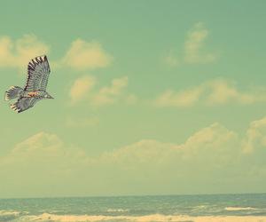 aguia, areia, and azul image