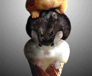 cute, mouse, and ice cream image