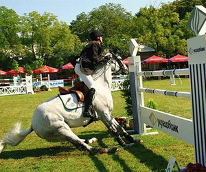 equitation, chute, and saut d'obstacle image