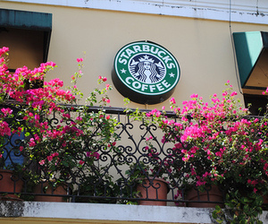 starbucks, flowers, and photography image