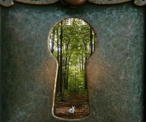 wonderland, rabbit, and alice image