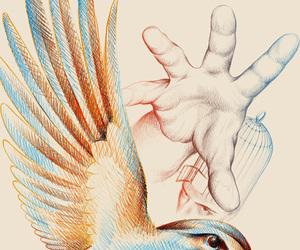 air, bird, and birds image