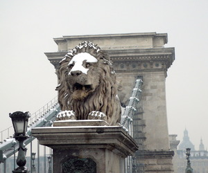 hungary, lion, and budapest image