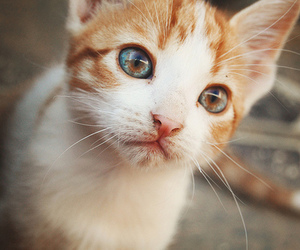 adorable, eyes, and meow image
