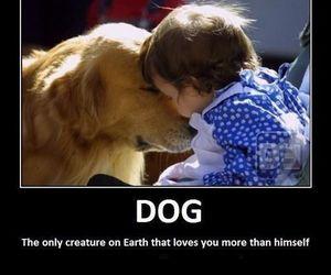 dog and love image
