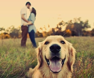 love, dog, and kiss image