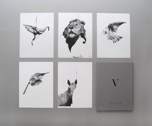 animals, birds, and black and white image
