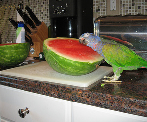 funny, lol, and parrot image