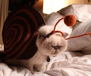 cat and costume image