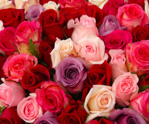color, rose, and flowers image