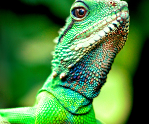 animal and reptile image