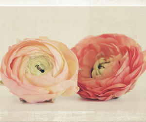 bloom, blossom, and blush image