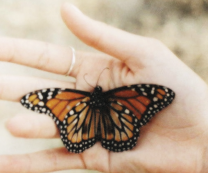butterfly, cute, and hand image