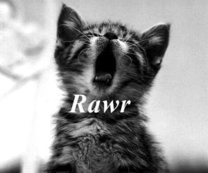 cat, rawr, and cute image
