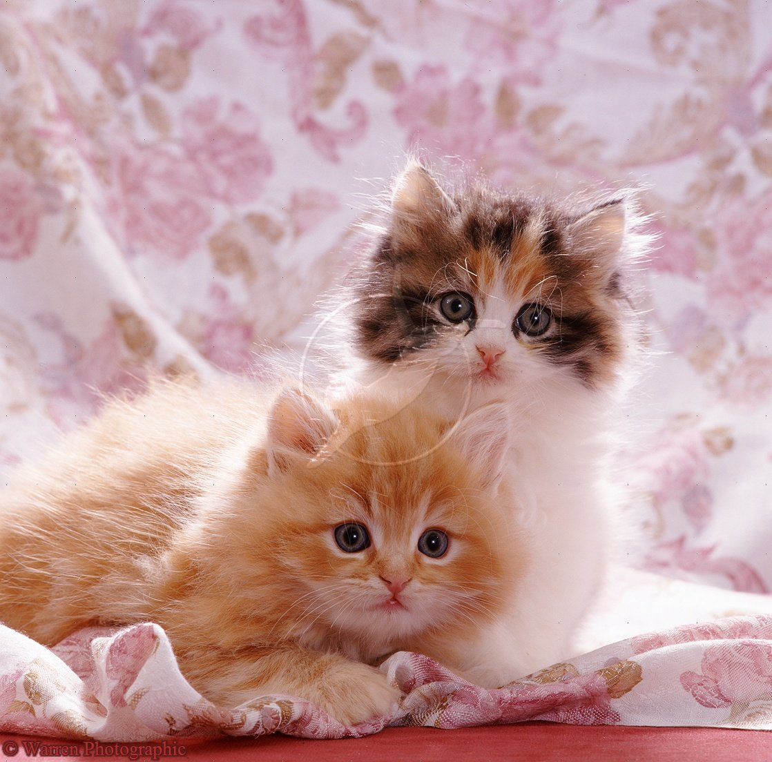 25 adorable pictures of cute cats and kittens kittens cute wallpapers cute dogs pets cute cats and kittens and wallpapers altavistaventures Choice Image