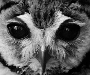 owl, black and white, and photography image