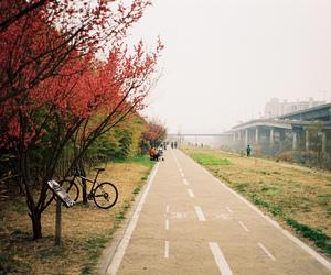 bike, nature, and photography image