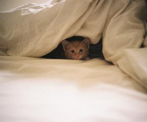 bed, cat, and cute image